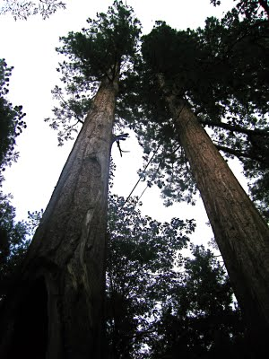 sequoia+national+5.jpg