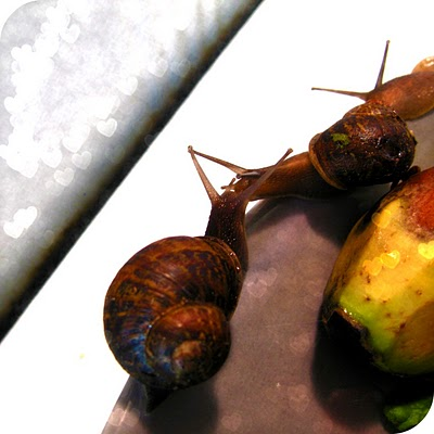 snail+13.jpg