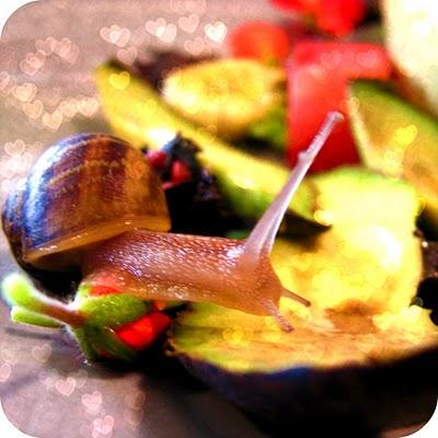 snail+12.jpg