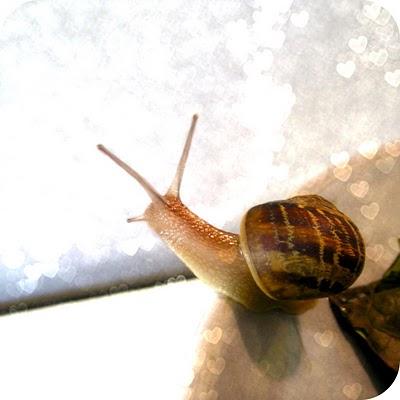 snail+9.jpg
