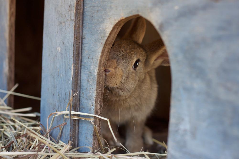Crystal Springs Farm rabbit 1.jpg