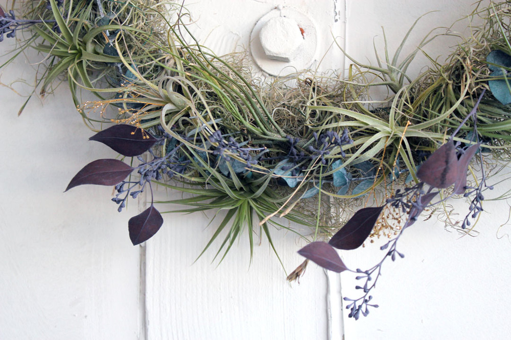 airplant wreaths for holidays.jpg