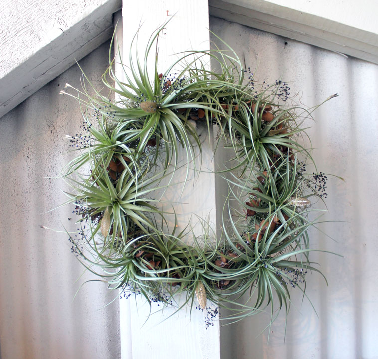 wedding wreath air plants.jpg