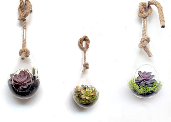 succulent rope globe terrarium los angeles.jpg