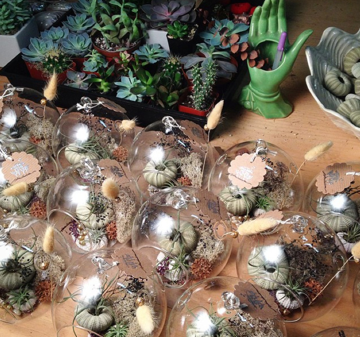 terrariums los angeles succulents.jpg