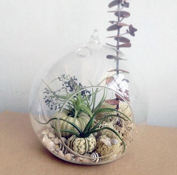 air plant terrarium garden by robincharlotte.jpg