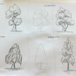 September - Week Two - pencil and paper - (tree reference chart)