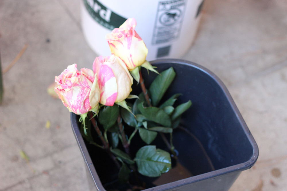 As you finish wiring, put each rose back into water.
