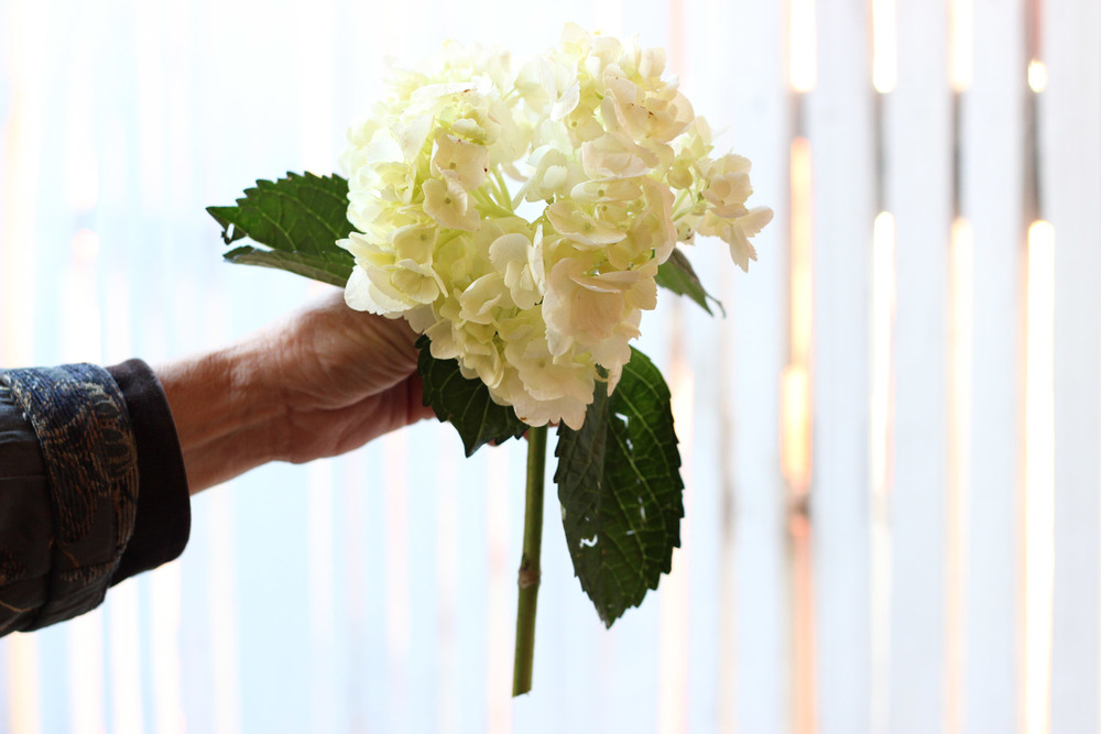 Cut 2 hydrangea pieces about so.