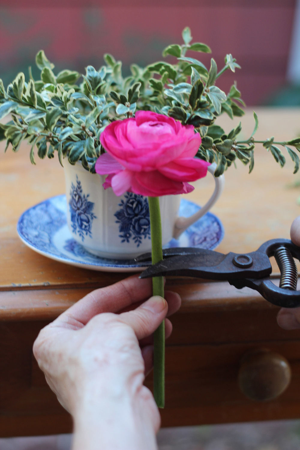 Hold the ranunculus in front of the cup to measure.