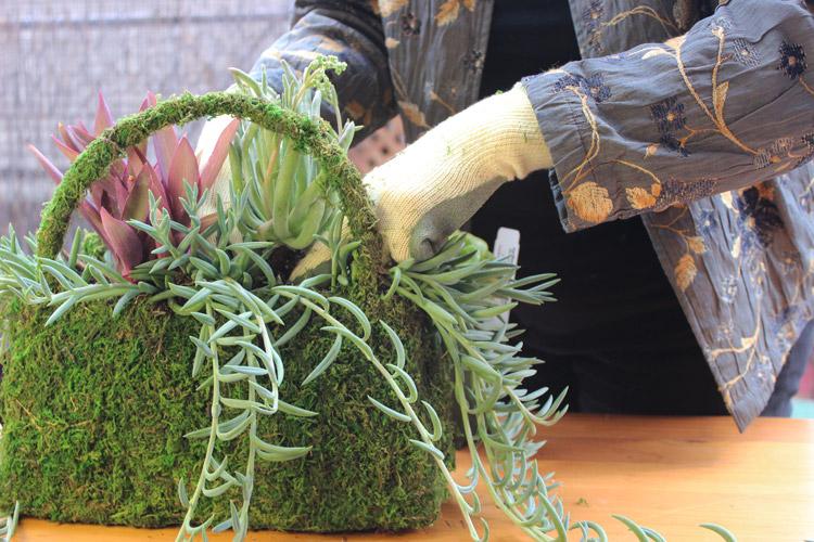 Loosen roots. Plant 'Fingertips' next to 'Purple Heart'.