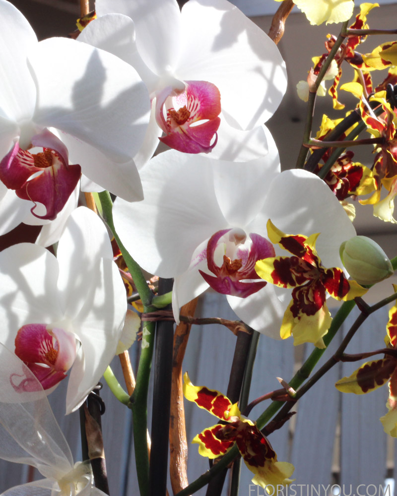 "Add white & fuchsia Phalaenopsis in middle, a little lower than ""Dancing Ladies""."