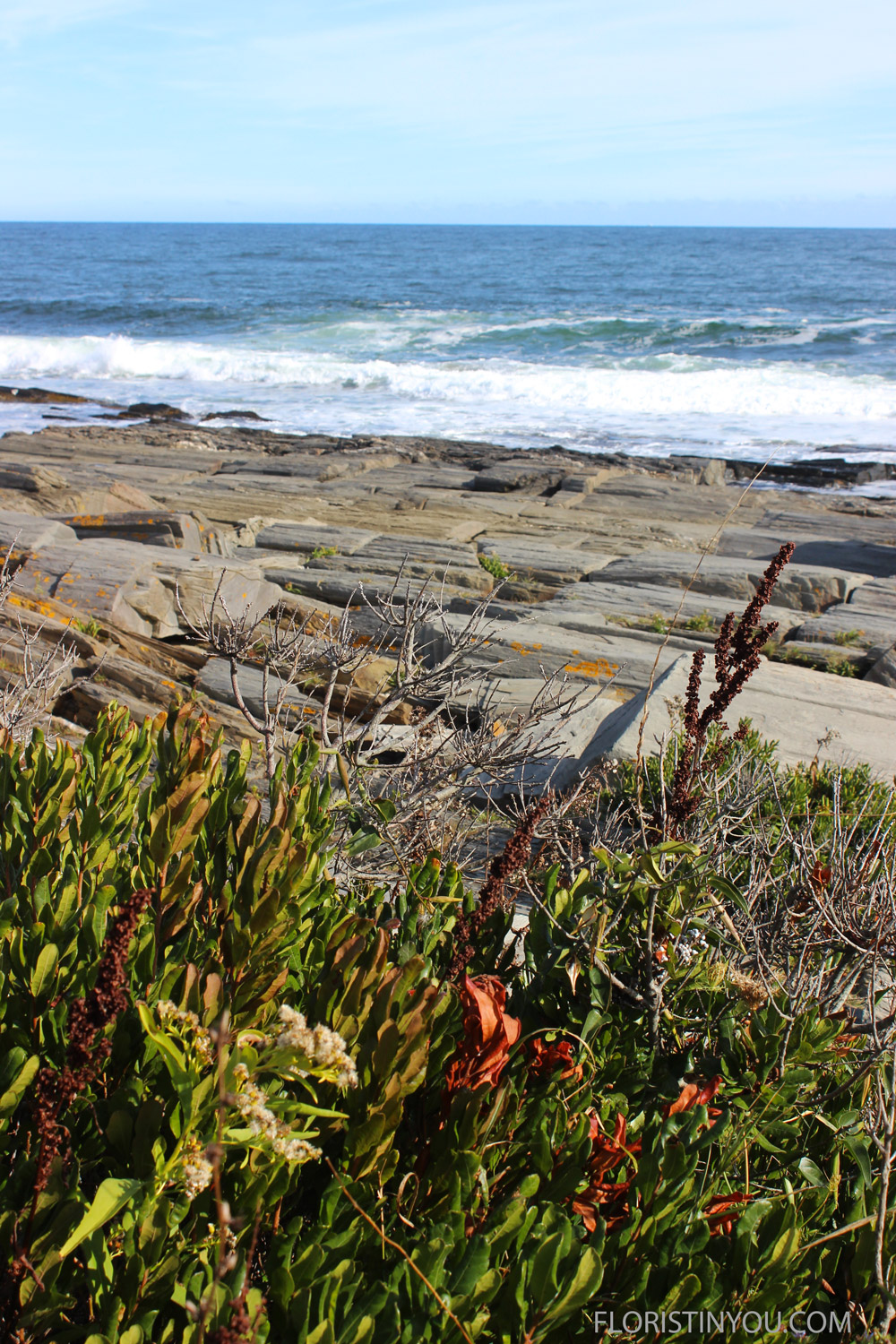 You will see the windswept wildflowers growing above the rocks.