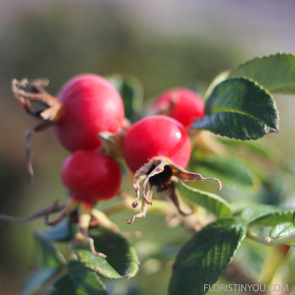 These are Beach Rose rose hips.