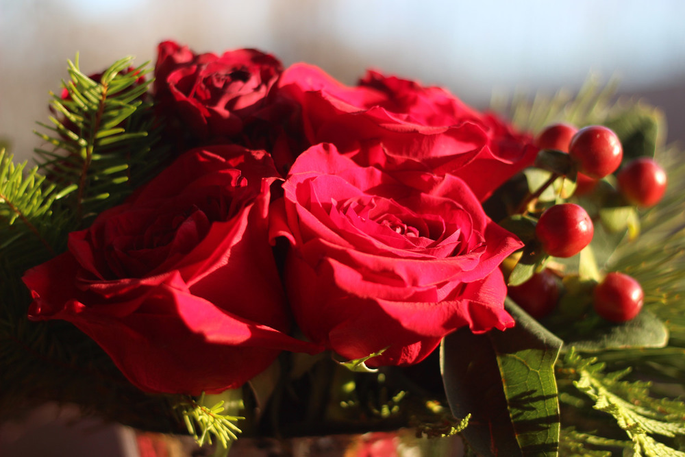 The roses look like red velvet.