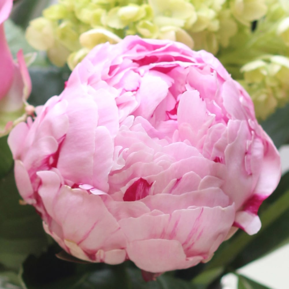 Peonies are always amazing.