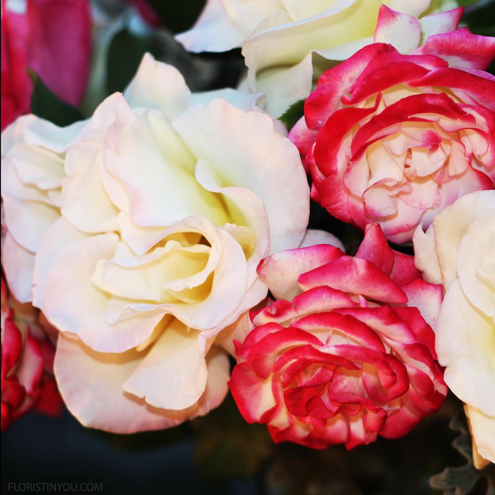 Close up of the Floribundas and x-large white Garden Roses