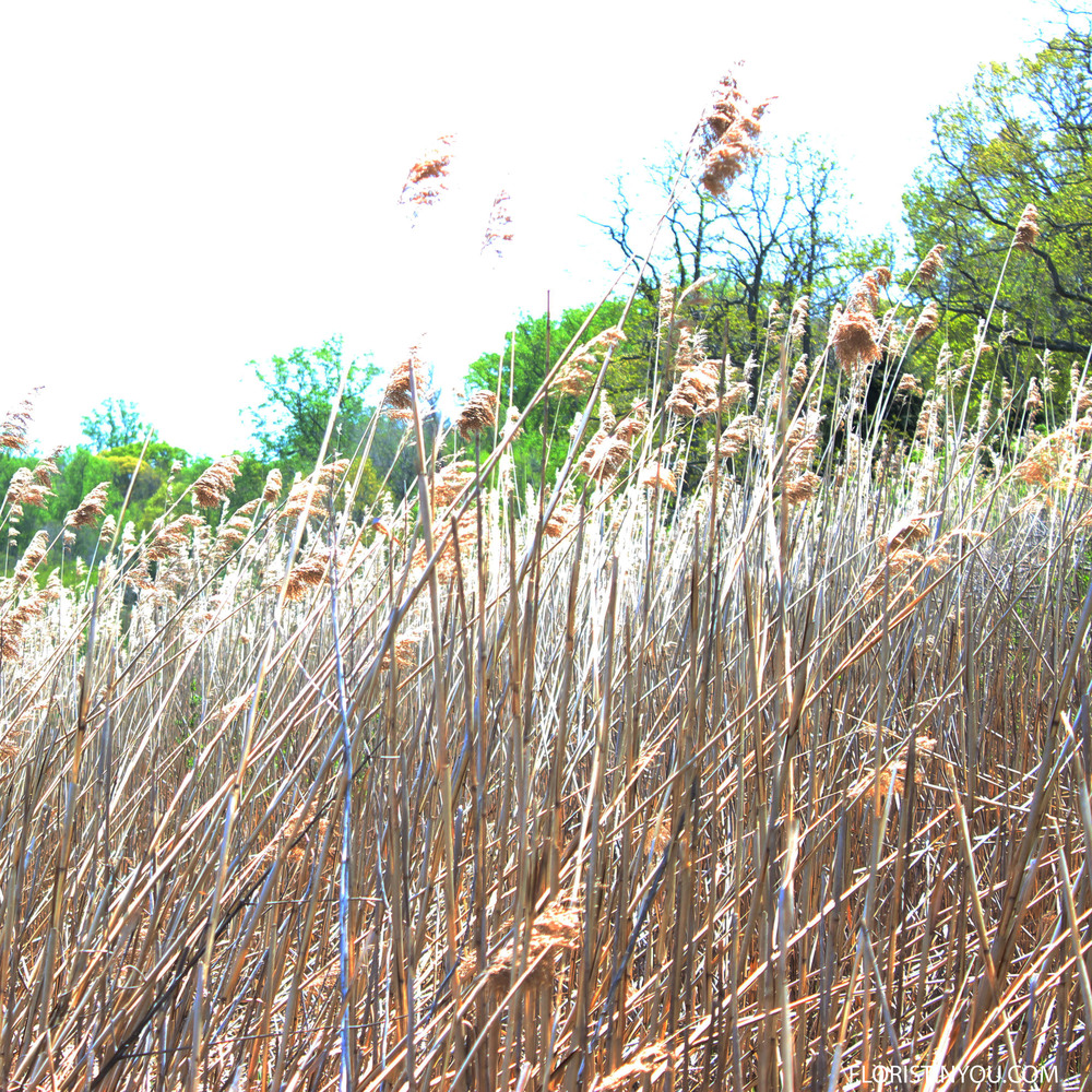 Reeds rustled along Head of the Harbor.