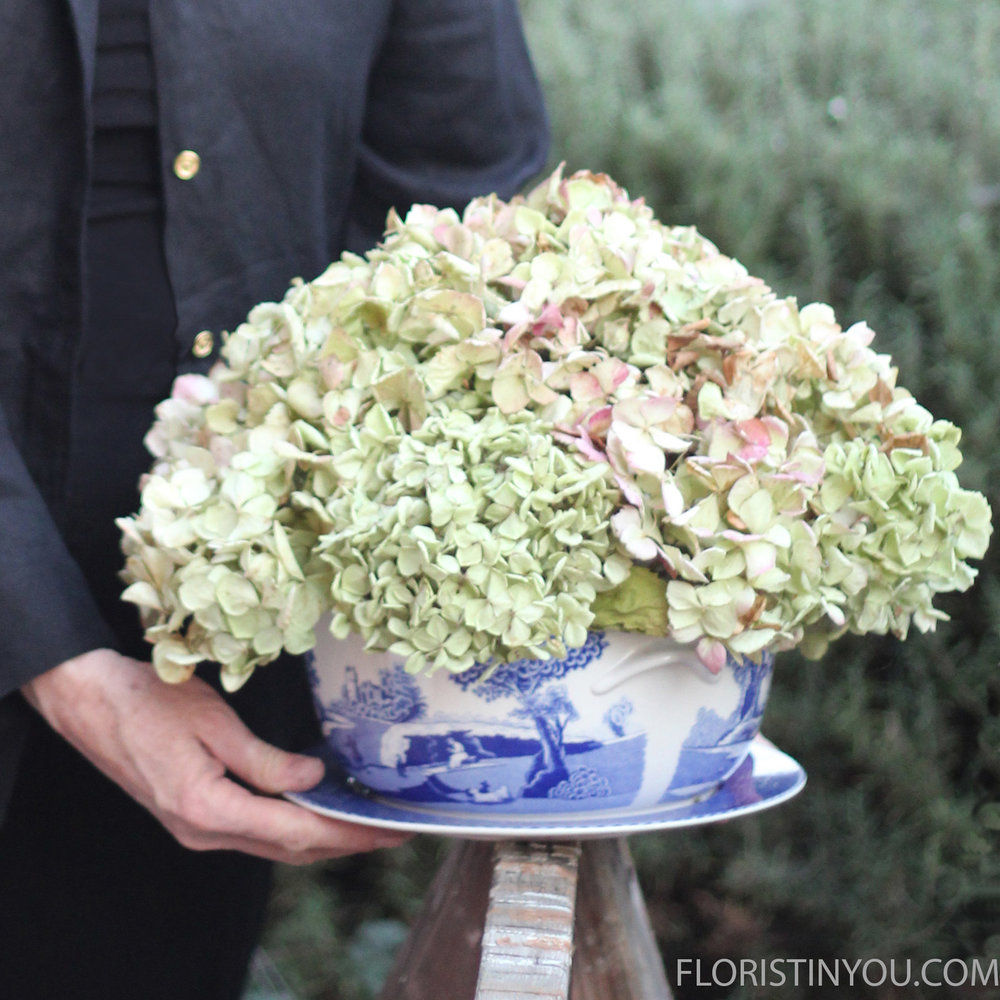 Dried Hydrangeas in Blue Italian Spode