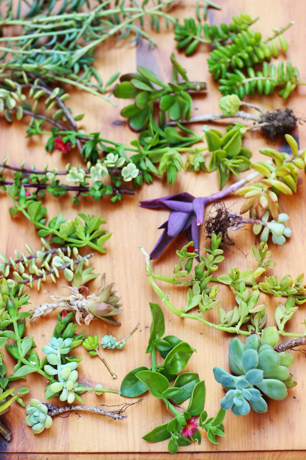 Let succulent cuttings sit for a day before gluing.  Don't place in direct sun.