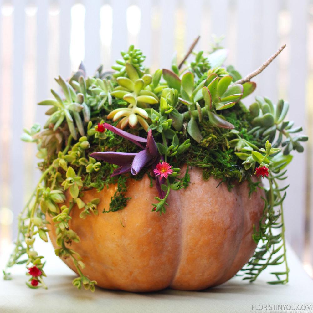 Fall Pumpkin Succulent Centerpiece