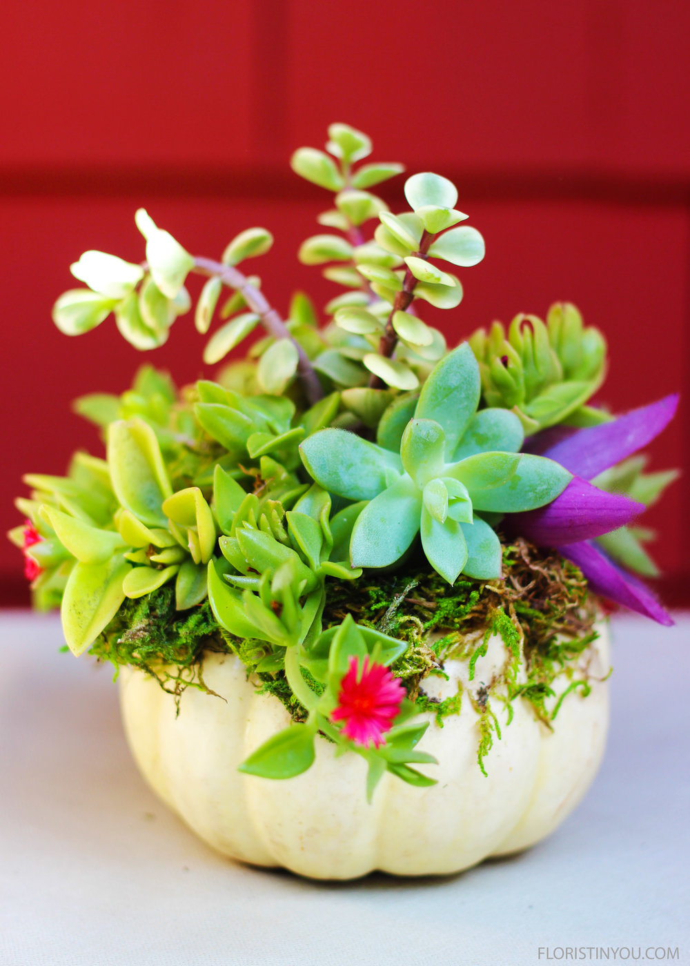 You are done with this cute little succulent topped pumpkin.  This will add some fun to your holiday table.  Enjoy!