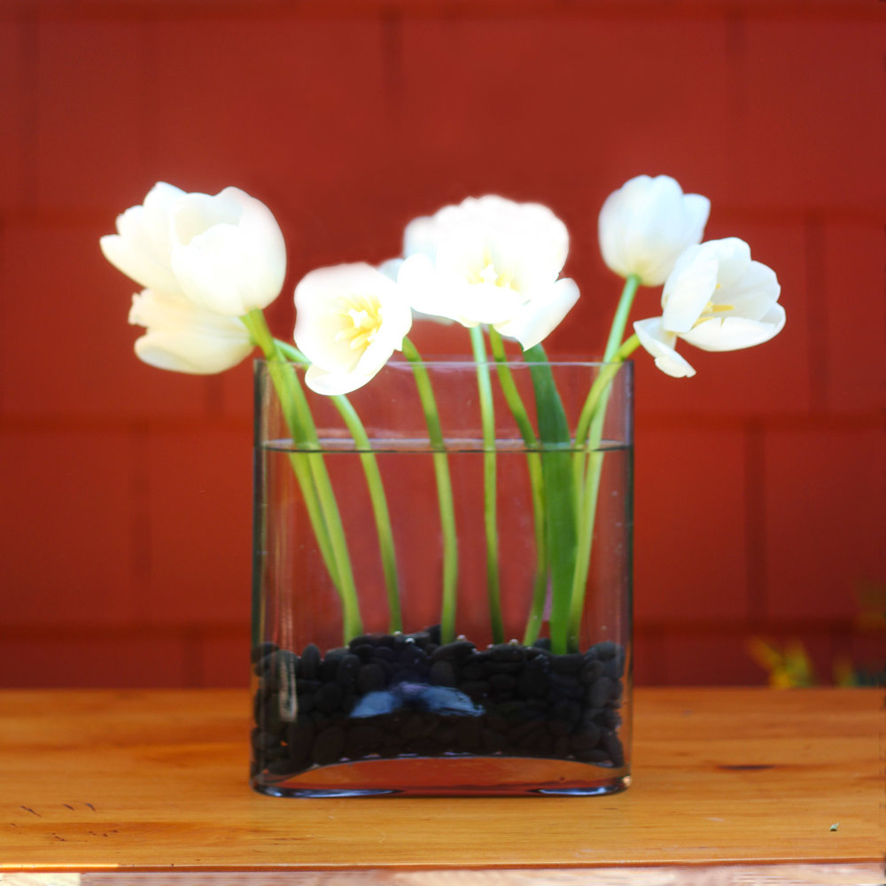 Place each white tulip...front, back, sides.   Push into the stones with stem straight.
