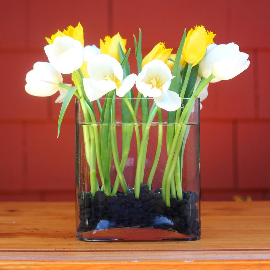 Back. (No yellow tulips yet.)