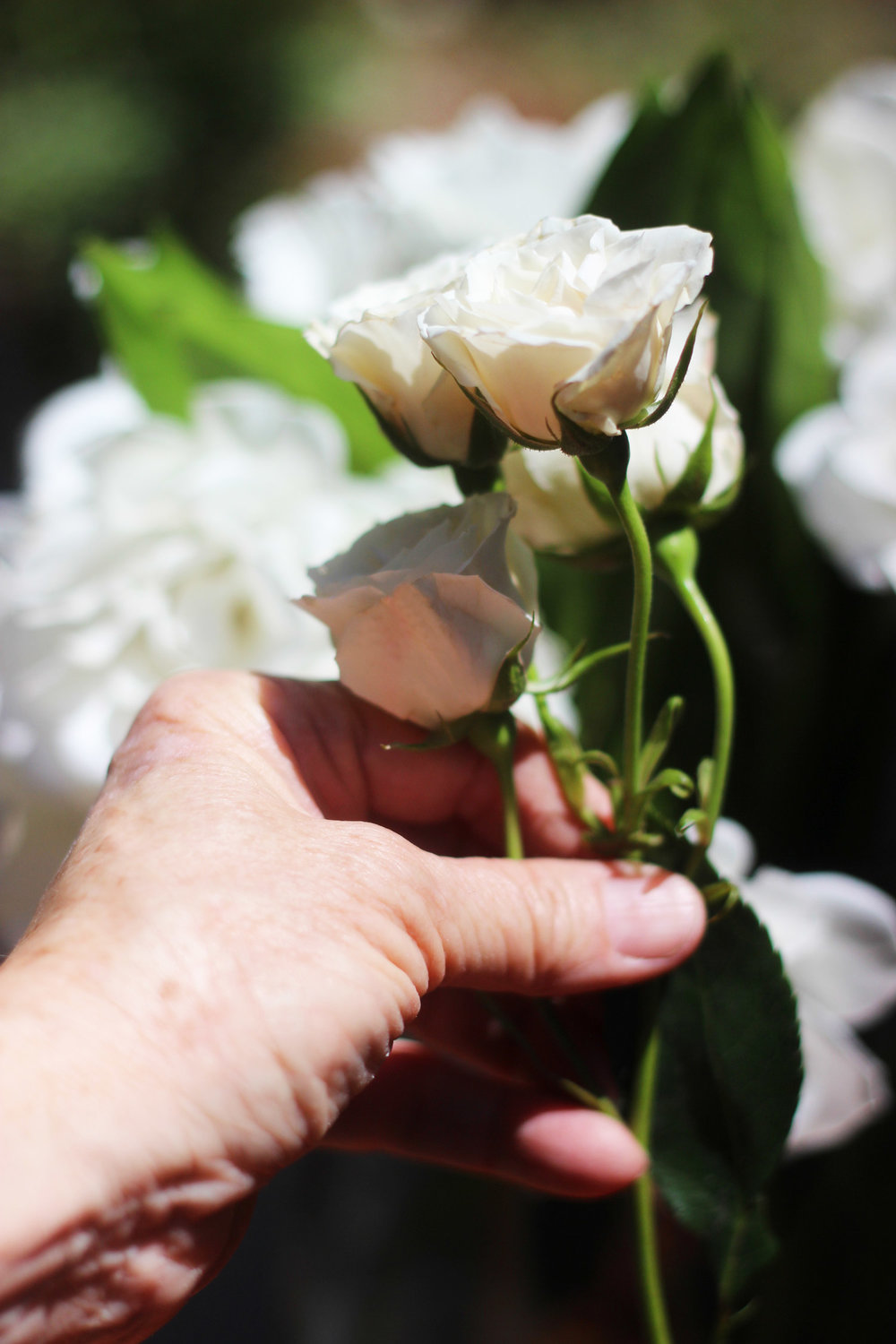 Place Spray Roses in with the Iceberg Roses with stems straight down.