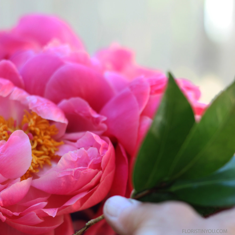 Insert between peonies at the base of the arrangement.