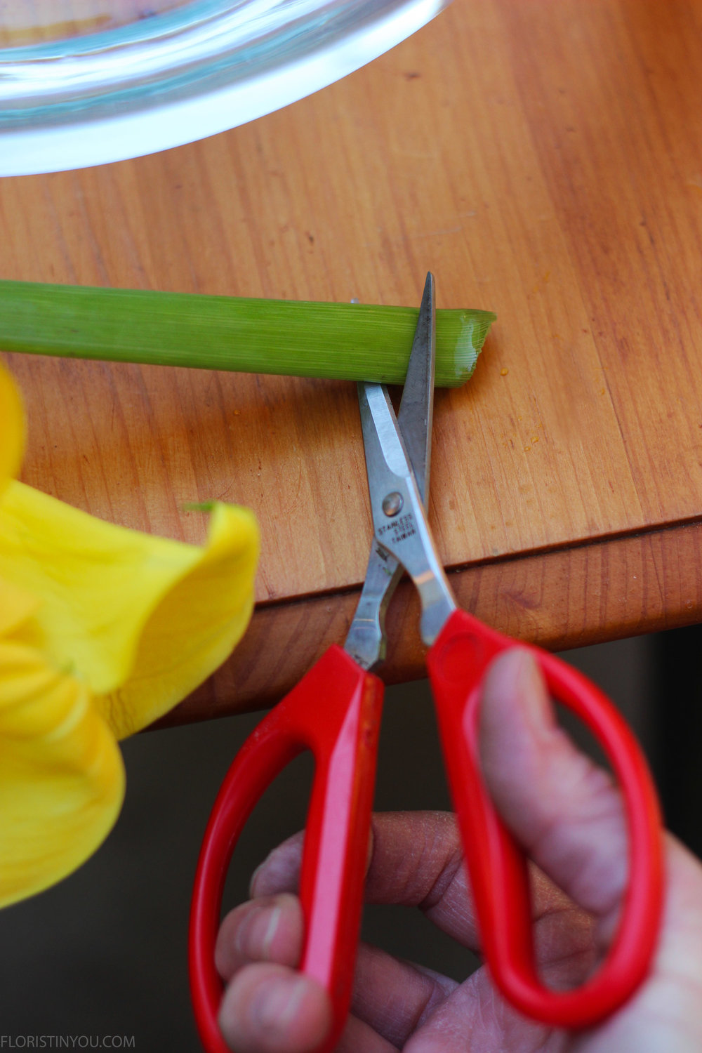 Give the Calla Lily stems a fresh cut on the diagonal.  (10 inches including bloom)