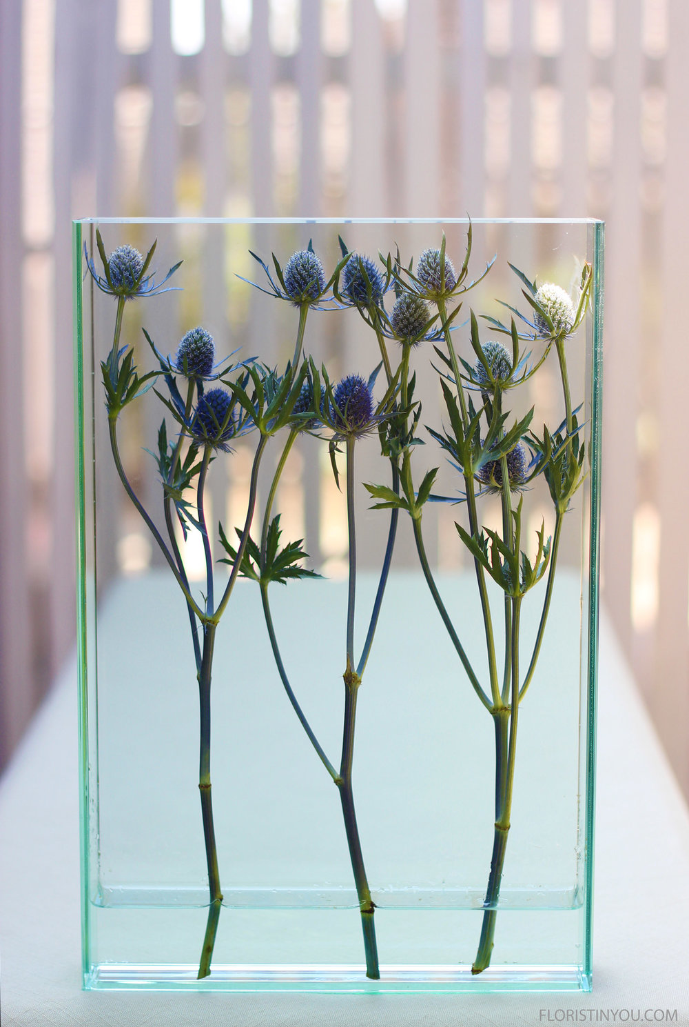 Amethyst Sea Holly in a Modern Vase