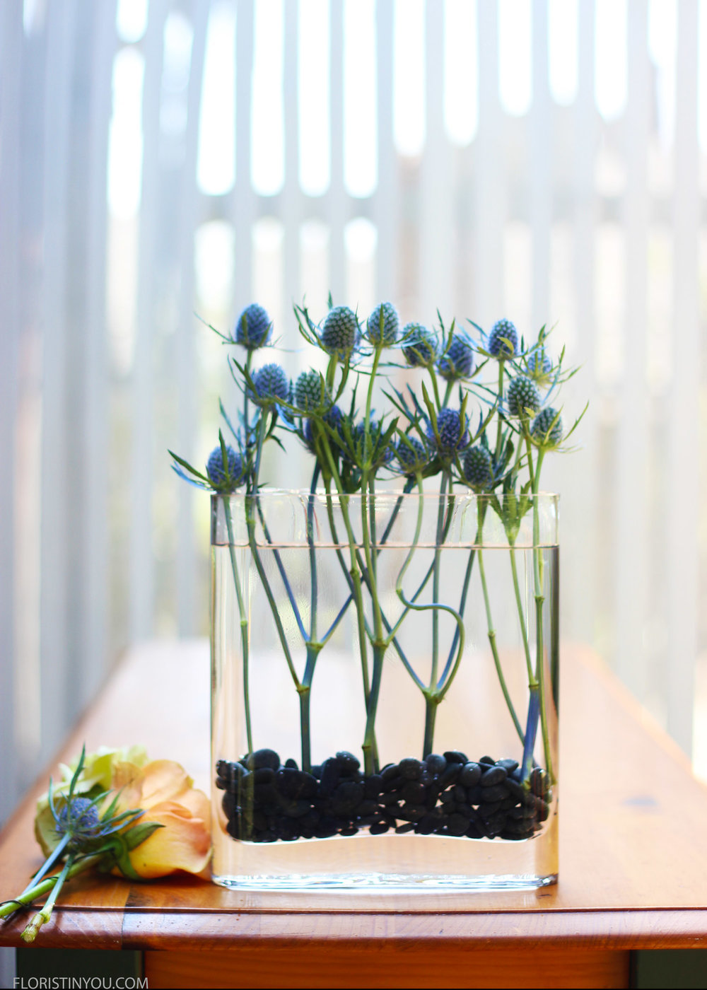 Put in a row of Sea Holly.  Make sure the stems go straight down.