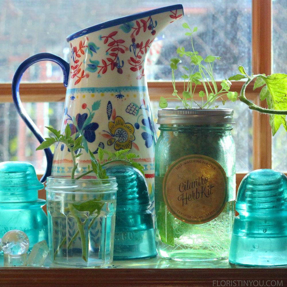 Grow a Window Garden