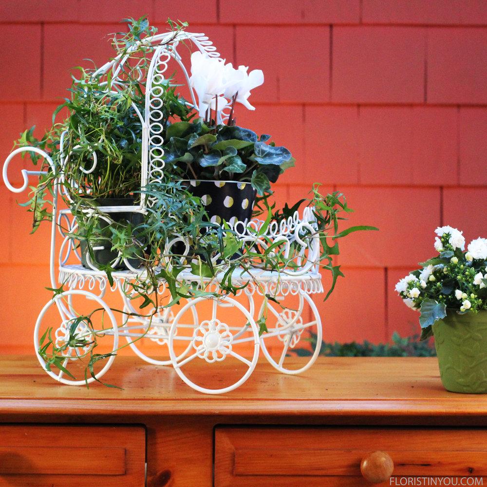 Add white cylclamen plants