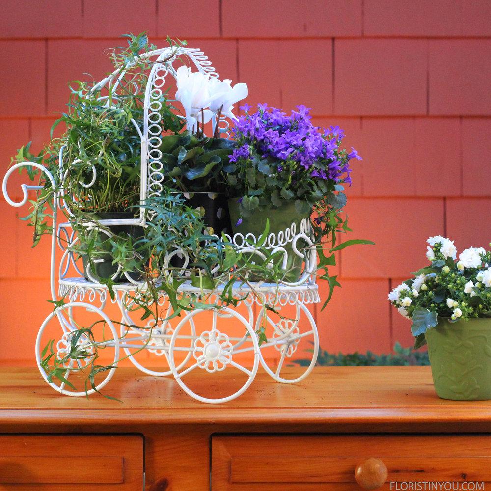 Add violet campanula plant.