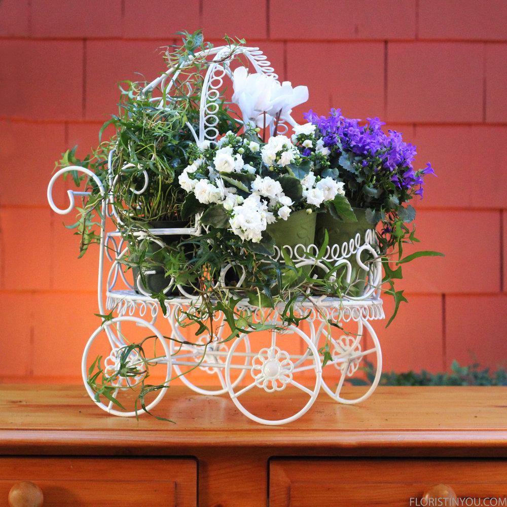 Add white campanula plant.