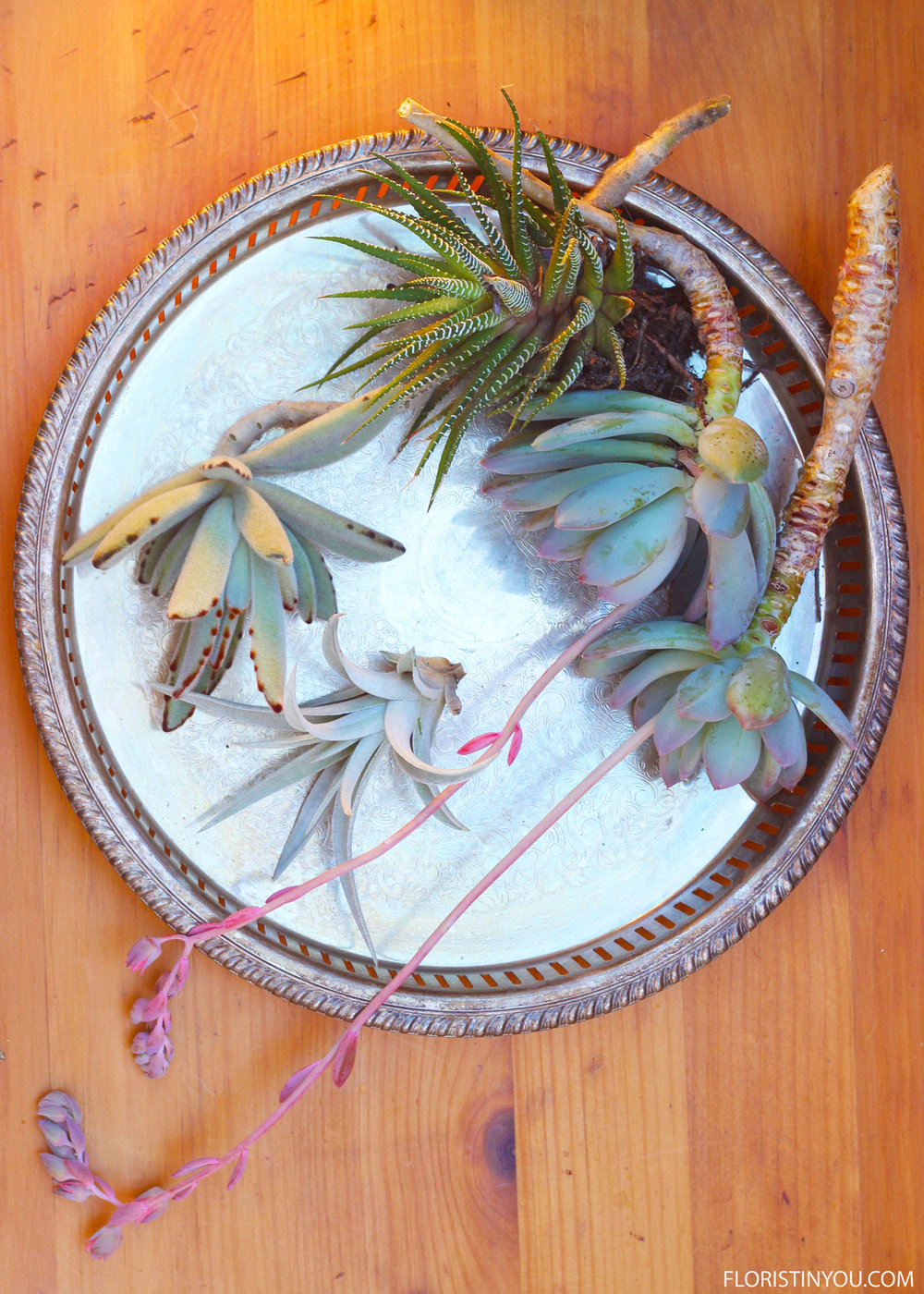 Leave stems on succulent cuttings about 9 inches long.