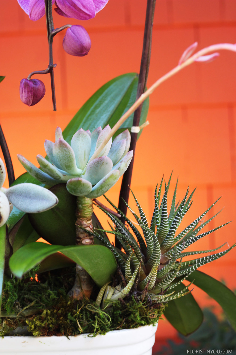 Here's a close up of the zebra plant and an echeveria.