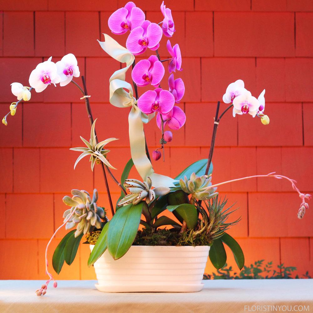 Orchid & Succulent Garden