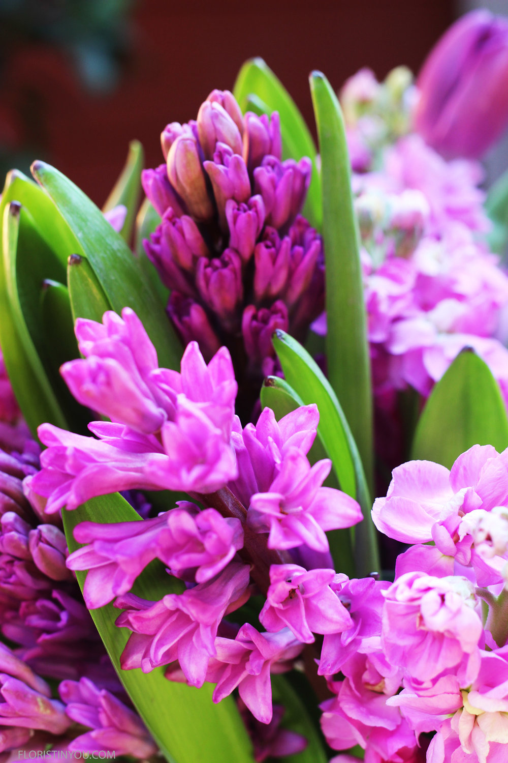 Notice the tiny flowers of the hyacinth.
