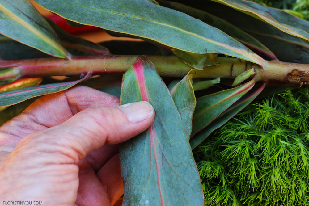 Pull leaves off Protea that will be below water line.