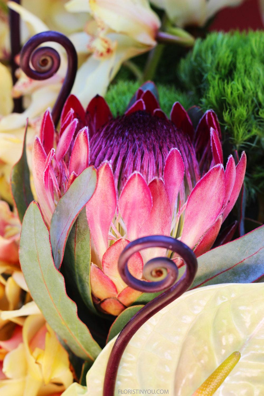 The pink Protea looks like an artichoke on fire.