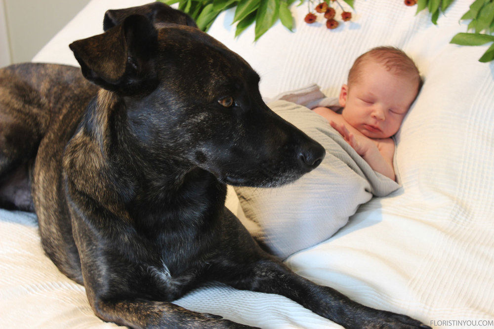 That's right. You're doing a good job guarding the baby.