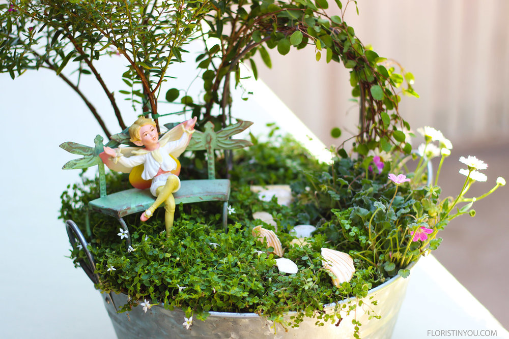 You will find bonsai trees on the shop-fairy-garden link too.