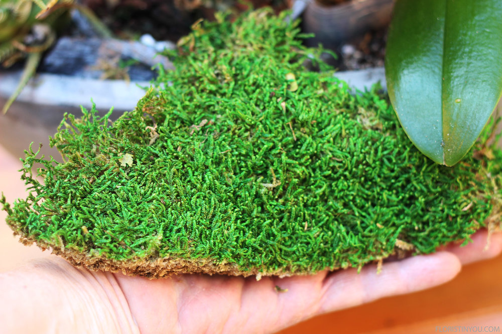 Cut moss with a curve and fit around plants.