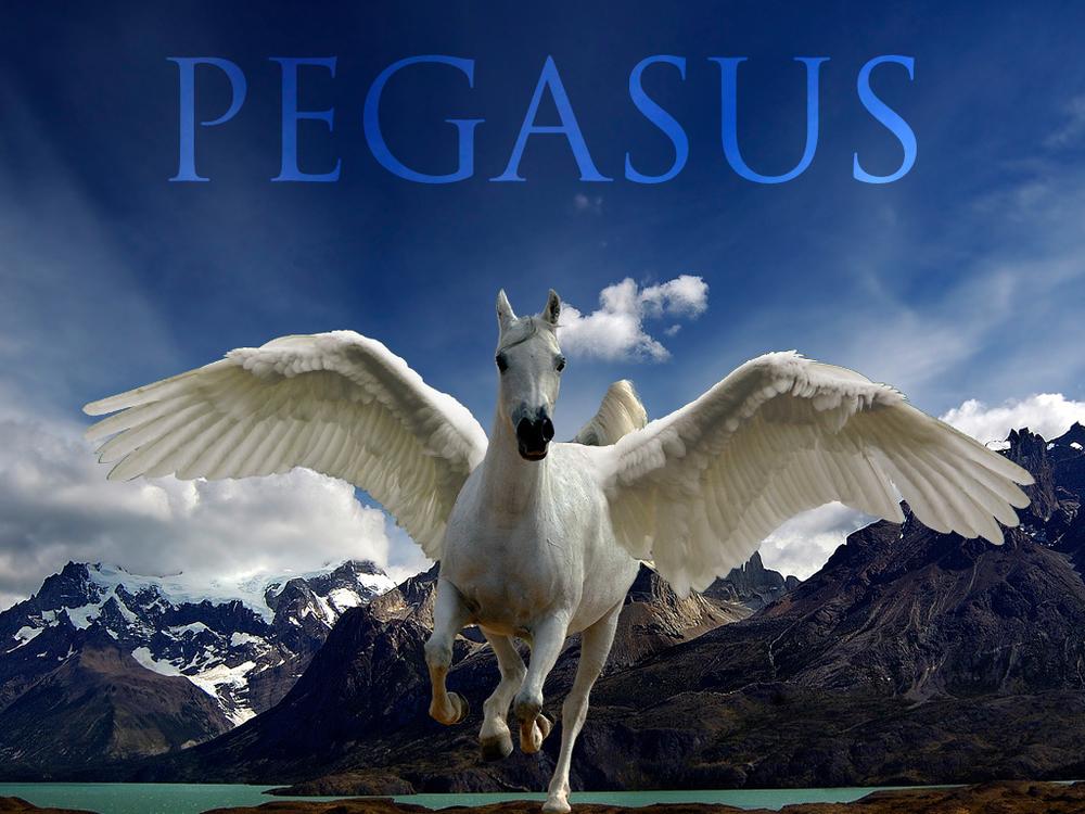 04 Pegasus final.jpg