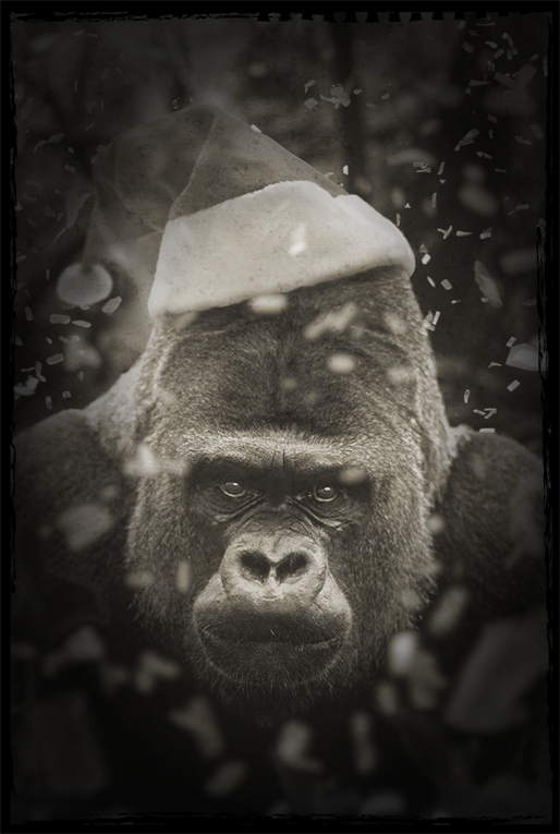 santa hat on gorilla.jpg