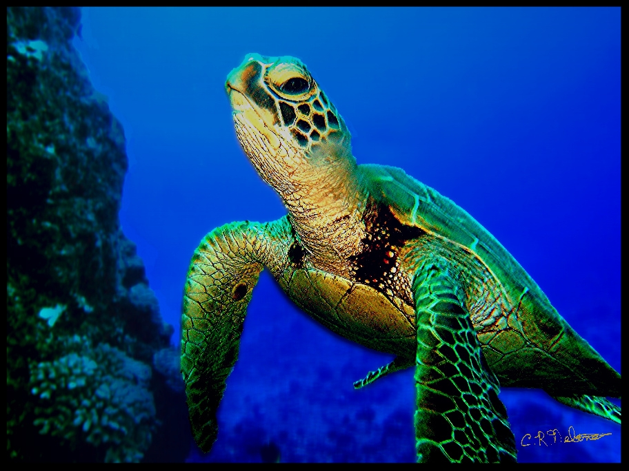 Sea Turtle green face.jpg