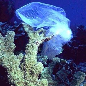 marinedebris-coralreef.jpg